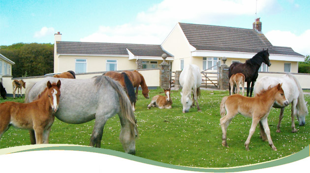 01_horses