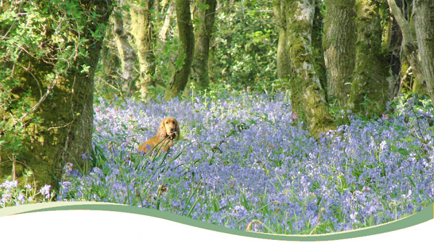 01_bluebell_doggy