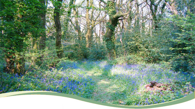 01_bluebell_forest1